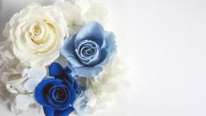 青・白薔薇